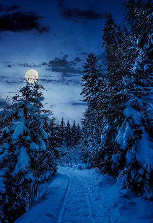 pad door vuren bos in de winter. prachtige natuur landschap met besneeuwde bomen in de nacht in volle maanlicht