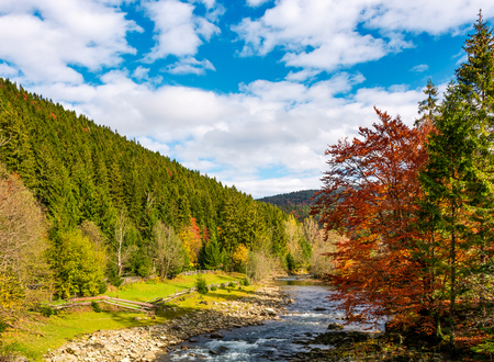 mountain river on fine autumn day. beautiful Carpathian Countryside Banco de Imagens - 87639084