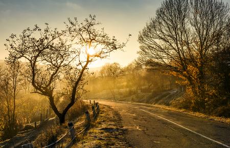 벌 거 벗은 나무와 아침 안개에 국가로. 아름다운 가을 풍경 스톡 콘텐츠