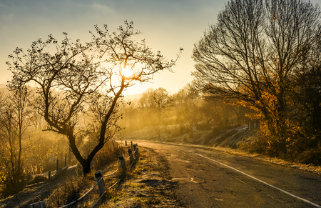 country road in morning fog with naked trees. beautiful autumn scenery 版權商用圖片