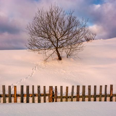 울타리 뒤에 눈 덮인 언덕에 외로운 나무. 겨울 아침 빛의 아름다운 시골 풍경