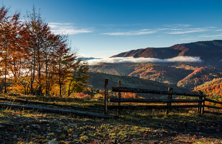 산악 시골에서 화려한 안개가 아침. 늦은 가을에 언덕에 노란색 단풍과 나무 울타리와 나무 아름 다운 풍경