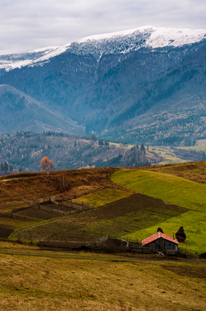 abandoned wooden barn and lonely tree with yellow foliage, on hillside in high mountains with snowy tops. magnificent deep autumn countryside landscape Stock Photo