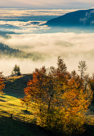orchard with red foliage in foggy mountains. gorgeous rural autumn scenery at sunrise