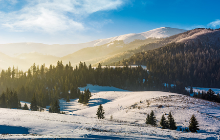 spruce forest on snowy hills. gorgeous winter landscape in mountains Stock Photo