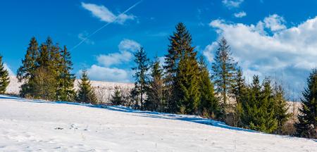 雪に覆われた丘の中腹に小ぎれいな木の行。晴れた冬の日の美しい自然風景 写真素材