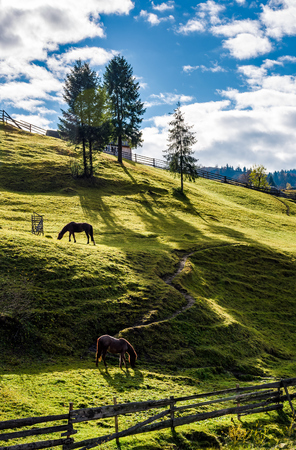 horses grazing on the gassy slope near the trees. beautiful sunny autumn day in rural area Stock Photo