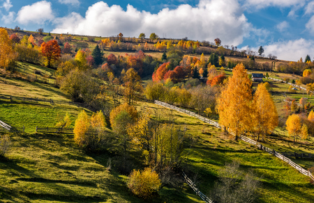 rural area on hillside in autumn. spectacular countryside scenery with yellow trees, fences and fields in fine weather condition Stock Photo