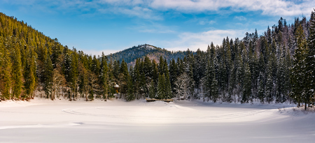 panorama of spruce forest in winter mountains. gorgeous nature scenery Stock Photo