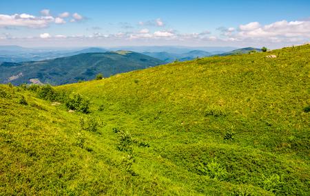 山の尾根の芝生の草原。天気の良い美しい夏の風景