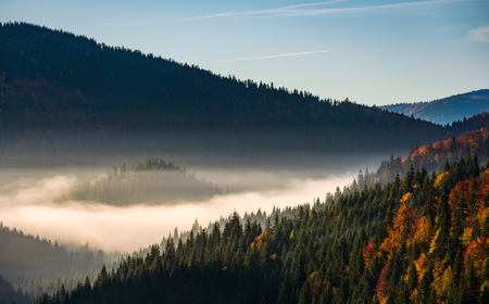 forest in valley at foggy sunrise. gorgeous mountain scenery in autumn Stock Photo