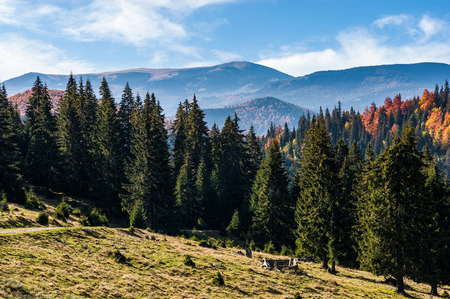 Gorgeous Carpathian mountain landscape in autumn at sunrise. Mixed forest on hillsides of Apuseni Natural park in Romania. Bihor Mountain ridge in the distance
