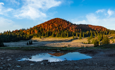 mountain with autumn forest reflecting in a puddle. lovely morning landscape Stock Photo