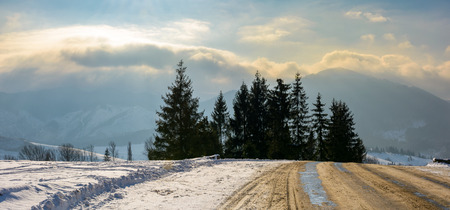 road through spruce forest in high mountains. gorgeous cloudscape over the mountain ridge at sunrise