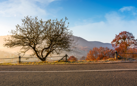 interesting tree by the road at foggy sunrise. beautiful mountainous countryside in late autumn
