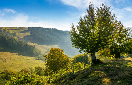 trees on hillside in mountainous countryside. lovely early autumn landscape in fine weather Stock Photo