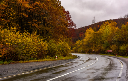 turnaround on wet road through forest in autumn. dangerous transportation scenery. miserable rainy weather in mountains.
