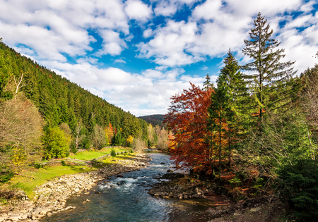 gorgeous autumn landscape in mountains. small river flows through rural valley among coniferous forests. few trees in red and yellow foliage Stock Photo