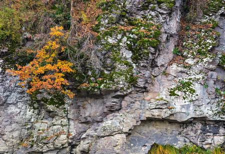 rotsachtige klif met planten in de herfst. mooie achtergrond met veel texturen Stockfoto