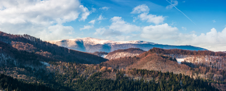 panorama of mountain ridge with snowy top. beautiful forested rolling hill on a bright winter day