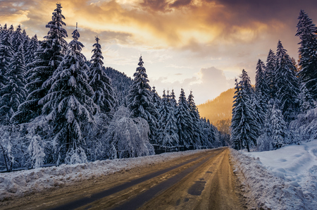 asphalt road through spruce forest at sunset. gorgeous nature scenery in winter mountains Stock Photo