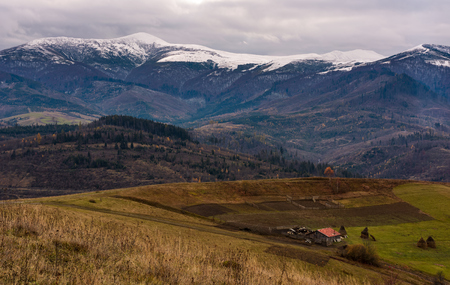 rural area in snowy alpine mountains. gloomy scenery with woodshed, tree, weathered grass and snowy tops Stok Fotoğraf