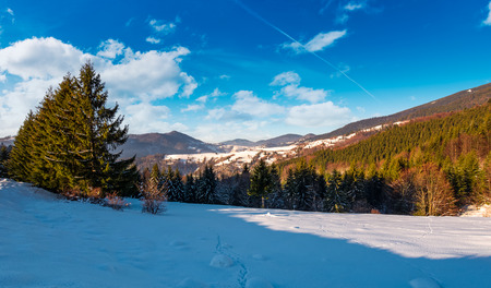snow covered meadow among spruce forest in mountains. beautiful winter landscape on  a bright day Stock Photo