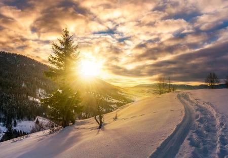 日の出で雪に覆われた丘の中腹に孤独なトウヒ。山の中の豪華な冬景色 写真素材