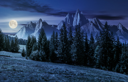 spruce forest on grassy hillside in mountains with rocky peaks at night in full moon light. gorgeous composite image of summer landscape. strengths and eternity concept
