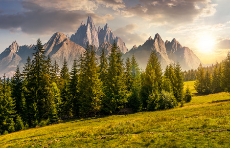 spruce forest on grassy hillside in mountains with rocky peaks at sunset. gorgeous composite image of summer landscape. strengths and eternity concept