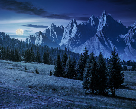 spruce trees on grassy hillside in mountains with rocky peaks at night in full moon light. beautiful composite summer landscape.