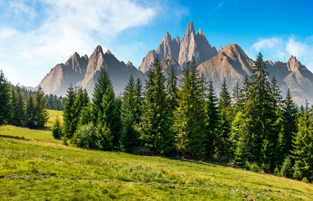 spruce forest on grassy hillside in mountains with rocky peaks. gorgeous composite image of summer landscape. strengths and eternity concept Фото со стока