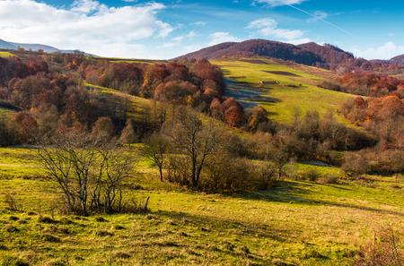 晩秋の中山間地域。緑の草が茂った丘の赤味がかった葉を持つ木です。晴れた日に素敵な天気