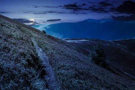 pad hoewel berg heuvels en kam 's nachts in volle maan licht. prachtig landschap met vuren boom op een helling bij mooi weer aan het einde van de zomer Stockfoto