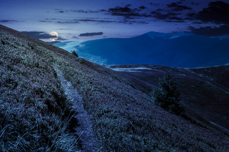 path though mountain hills and ridge at night in full moon light. beautiful scenery with spruce tree on a slope in fine weather on late summer
