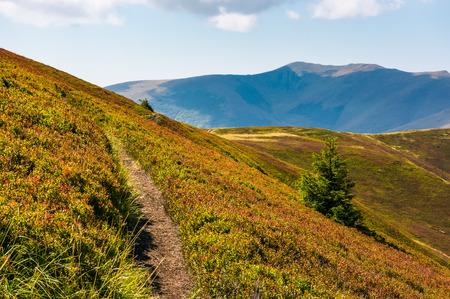 山の丘と尾根を介してパス。夏の終わりの晴天の斜面にトウヒの木と美しい風景