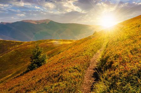 山の丘や尾根のように道が沈む。夏の終わりの晴天の斜面にトウヒの木と美しい風景 写真素材