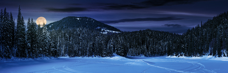 snowy meadow in spruce forest at night in full moon light. location lake Synevyr Ukraine, frozen in winter. beautiful nature panoramic landscape in Carpathian mountains