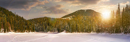 snowy meadow in spruce forest at sunset. location lake Synevyr Ukraine, frozen in winter. beautiful nature panoramic landscape in Carpathian mountains Stock Photo