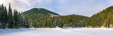 snowy meadow in spruce forest. location lake Synevyr Ukraine, frozen in winter. beautiful nature panoramic landscape in Carpathian mountains