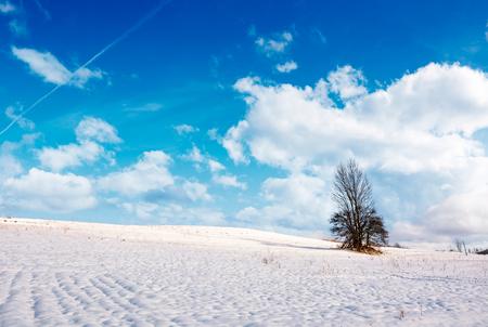 눈 덮인 언덕에 외로운 나무입니다. 좋은 겨울 날 흐린 푸른 하늘 사랑스러운 자연 풍경 스톡 콘텐츠