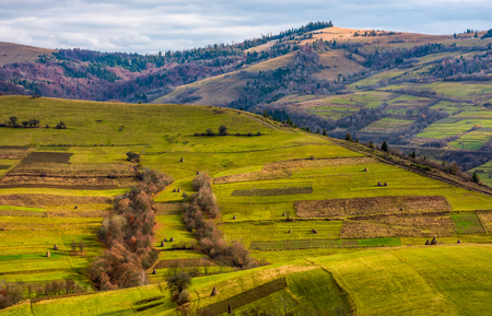 grassy rural hill in late autumn sunny day. beautiful scenery in mountainous area