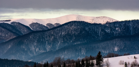 forested mountain ridge with snowy tops at dawn. beautiful nature scenery in winter Stock Photo