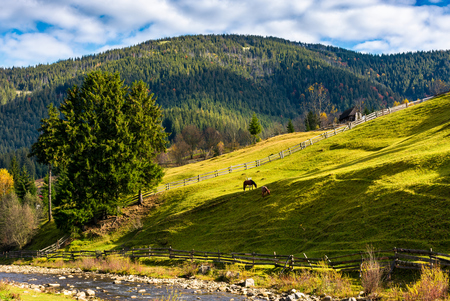 two horses on the grassy slope behind the fence. beautiful rural scenery on fine weather autumn day Stock Photo