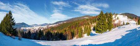 gorgeous panorama of winter countryside. beautiful scenery with spruce trees on snowy hillside. village in a distance at the foot of mighty Carpathian mountain ridge Stock Photo - 89911026
