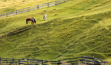horses grazing on a grassy hillside with wooden fences. lovely rural scenery in autumn 스톡 콘텐츠