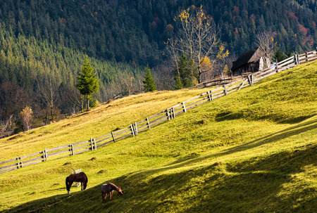 horses grazing on a grassy hillside with wooden fences near the village. lovely rural scenery in autumn Stok Fotoğraf