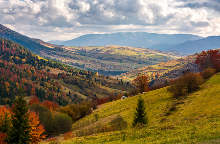 rural countryside in autumn. beautiful scenery in mountains with cloudy sky Stock Photo