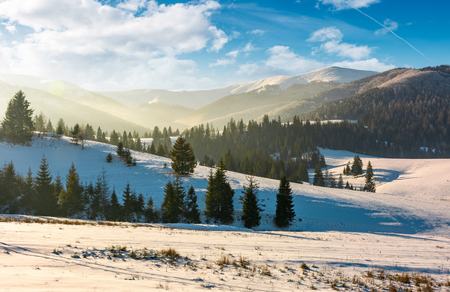 forested hills of mountain ridge in winter. gorgeous nature scenery at sunrise
