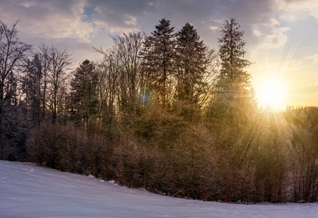 forest on snowy hillside at sunset. beautiful nature background